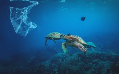 Ocean plastic pollution could nearly triple by 2040